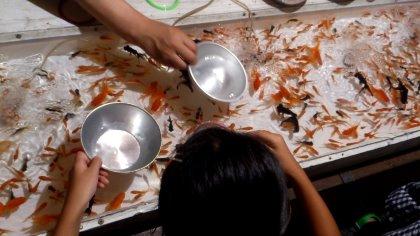 広島天満町 天神祭 下の娘の初金魚すくい
