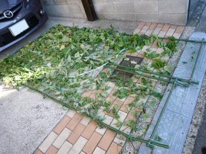 グリーンカーテン倒壊