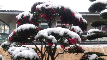 広島 久しぶりの大雪