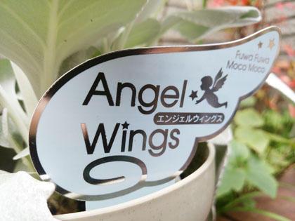 angelwings4_151129.jpg
