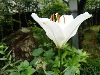 スマホで撮影した庭の花